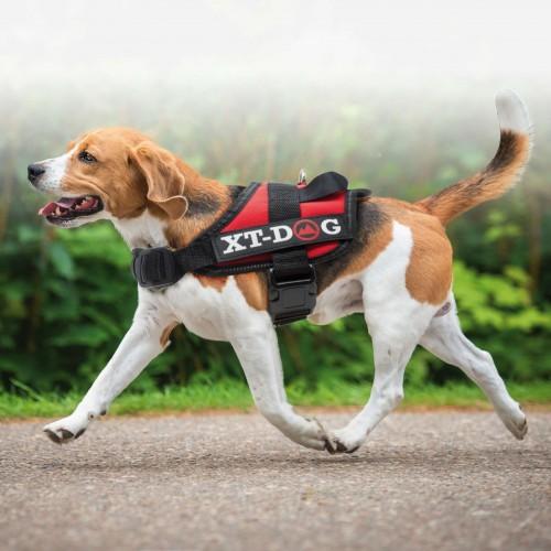 Arnés de seguridad XT-DOG